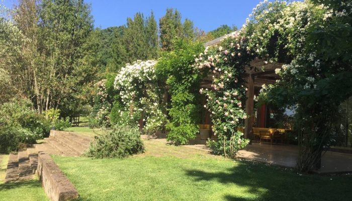 Salacocò in fiore