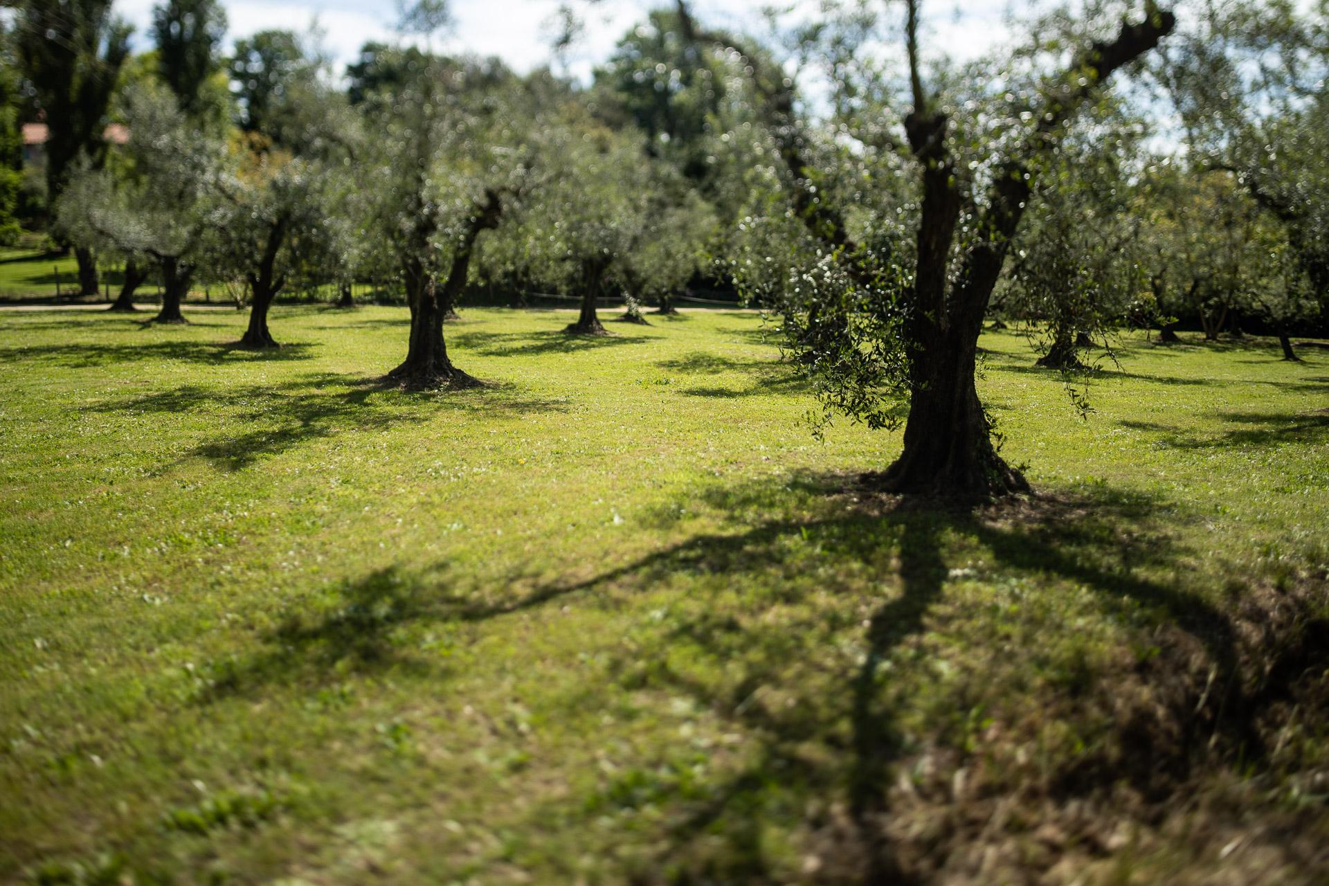 valletta degli ulivi